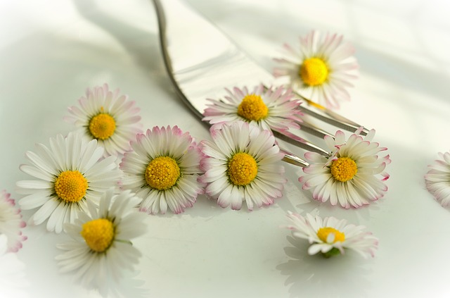 daisy-755517_640